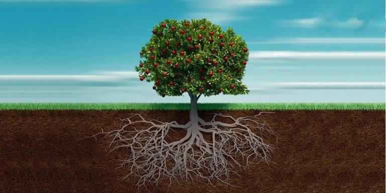 A Tree…
